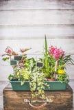 Różnorodne rośliny dla lato zbiornika ogrodnictwa przy białym drewnianym ściennym tłem Fotografia Stock