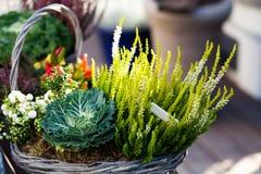 Różnorodne rośliny i kwiaty w łozinowym koszu skład dekoracyjny Zielony energii wciąż życia wizerunek Płytka głębia Zdjęcie Royalty Free