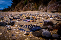 Różnorodne skorupy na plaży Zdjęcie Royalty Free
