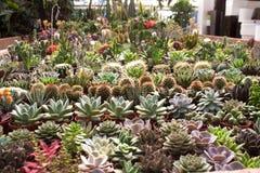 Różnorodne sukulent rośliny, kaktusy i obraz stock