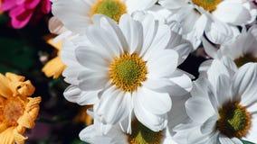 Różnorodni Ñ  hrysanthemums kwitną na czarnym tle Ð ¡ opy przestrzeń kolorowi bukiet?w kwiaty zdjęcia stock