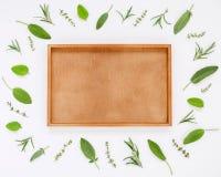 Różnorodni świezi ziele od rozmarynów, mędrzec, macierzanki i pe ogrodowych, Fotografia Royalty Free