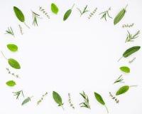 Różnorodni świezi ziele od rozmarynów, mędrzec, macierzanki i pe ogrodowych, Obraz Stock