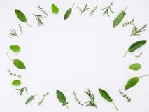 Różnorodni świezi ziele od rozmarynów, mędrzec, macierzanki i pe ogrodowych, Zdjęcie Royalty Free