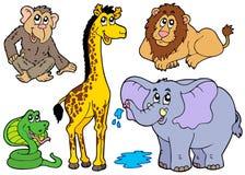 różnorodni afrykańscy zwierzęta Obrazy Royalty Free