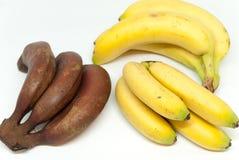 Różnorodni banana dziecka banany i czerwoni banany na białym tle Zdjęcia Stock