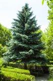 Różnorodni drzewni krajobrazowi obrazy jarzy się i kwitnie w wiośnie, gigantyczny akacjowy drzewo, gigantyczni sosna obrazki, Fotografia Royalty Free