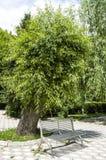 Różnorodni drzewni krajobrazowi obrazy jarzy się i kwitnie w wiośnie, gigantyczny wiszący wierzbowy drzewo Zdjęcie Royalty Free