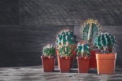 Różnorodni grupowi kaktusy na drewnianym tle Niezwykli i piękni sukulenty kosmos kopii fotografia stock