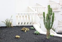 Różnorodni kaktusowi gatunki na tarasują ogród zdjęcia royalty free