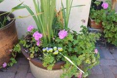 Różnorodni kwiaty i rośliny Obrazy Royalty Free