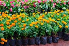 Różnorodni kwiaty sadzonkowi w zbiornikach obraz stock