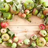 Różnorodni organicznie jabłka obrazy royalty free