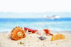 Różnorodni piękni seashells rozgwiazda i klatka piersiowa przeciw tropikalnemu błękitnemu morzu Obraz Royalty Free