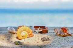 Różnorodni piękni seashells rozgwiazda i klatka piersiowa przeciw tropikalnemu błękitnemu morzu Obraz Stock