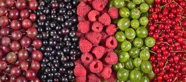 Różnorodni rodzaje świeże jagody jako tło Zdjęcie Stock
