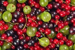 Różnorodni rodzaje świeże jagody jako tło Zdjęcia Royalty Free