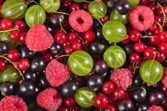 Różnorodni rodzaje świeże jagody jako tło Fotografia Royalty Free