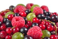 Różnorodni rodzaje świeże jagody zamykają up na bielu Zdjęcie Royalty Free