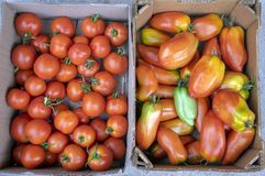 Różnorodni rodzaje dojrzewający pomidory w dwa pudełkach, czerwone owoc po żniwa, przygotowywają jeść obraz stock