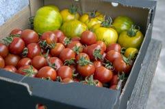 Różnorodni rodzaje dojrzewający pomidory w jeden pudełkowatym, czerwone owoc po żniwa, smakowity jedzenie, przygotowywają jeść obrazy stock