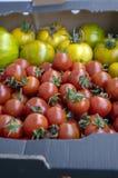 Różnorodni rodzaje dojrzewający pomidory w jeden pudełkowatym, czerwone owoc po żniwa, smakowity jedzenie, przygotowywają jeść fotografia royalty free