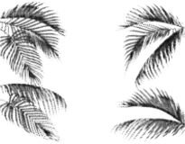 Różnorodni tropikalni palma liście Stylizowany kropka projekt w Czarny I Biały egzekucji pojedynczy białe tło royalty ilustracja