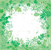Różnorodni ziele i liście lata wokoło fotografia royalty free