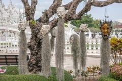 Różnorodność Chiang Raja w północnym Tajlandia Baimiao obwieszeniu na drzewie demony Obrazy Royalty Free
