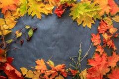 Różnorodność jesień liście gałązki i jagody kłaść out na zmroku zdjęcie stock