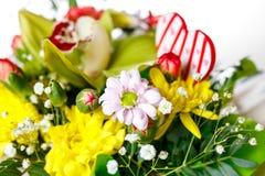 Różnorodność miłość kwitnie początek wiosna Zdjęcia Royalty Free
