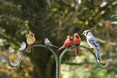 różnorodności ptasi spotkanie Obraz Royalty Free