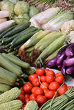 Różnorodny świeży warzywo Obraz Royalty Free