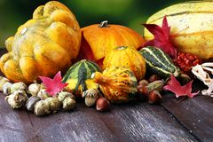 Różnorodny asortyment banie na drewnianym tle Jesieni brzęczenia fotografia royalty free