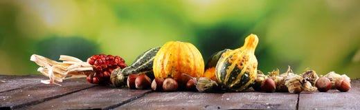Różnorodny asortyment banie na drewnianym tle Jesieni brzęczenia zdjęcia stock