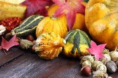 Różnorodny asortyment banie na drewnianym tle Jesieni brzęczenia fotografia stock
