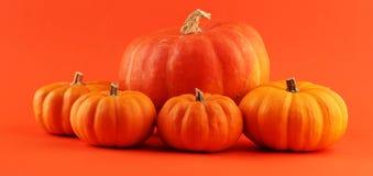 Różnorodny asortyment banie na pomarańczowym tle Jesieni brzęczenia zdjęcie stock