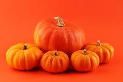 Różnorodny asortyment banie na pomarańczowym tle Jesieni brzęczenia obraz stock