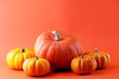 Różnorodny asortyment banie na pomarańczowym tle Jesieni brzęczenia obrazy royalty free