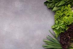 Różnorodny greenery na szarym tle, odgórny widok zdjęcia royalty free