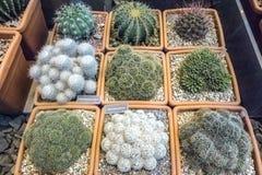 Różnorodny kaktusowa roślina w odgórnym widoku dla modnisia wzoru w cact Fotografia Royalty Free