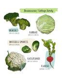 Różnorodny kapusta set kapusta, brokuły, Brukselskie flance, cauli ilustracji