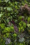 Różnorodny kolor i kształt liście obraz royalty free