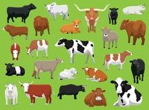 Różnorodny krowa byka bydło Pozuje Wektorową ilustrację ilustracji