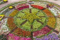 Różnorodny kwiat na ogrodowy łonowym Fotografia Stock