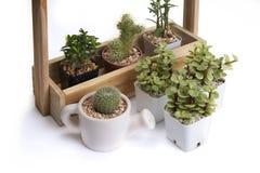 Różnorodny mały kaktus w różnicy jardiniere obraz royalty free