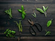 Różnorodny pikantność i ziele na drewnianym tle Mieszkanie pikantność nieatutowi składniki rozmaryny, macierzanka, oregano, mędrz zdjęcie royalty free