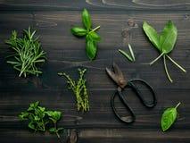 Różnorodny pikantność i ziele na drewnianym tle Mieszkanie pikantność nieatutowi składniki rozmaryny, macierzanka, oregano, mędrz fotografia royalty free