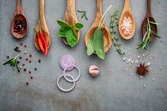 Różnorodny pikantność i ziele w drewnianych łyżkach Mieszkanie pikantność nieatutowi składniki chili, peppercorn, rosemarry, tymi obraz royalty free