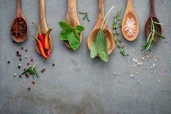 Różnorodny pikantność i ziele w drewnianych łyżkach Mieszkanie pikantność nieatutowi składniki chili, peppercorn, rosemarry, tymi obrazy royalty free